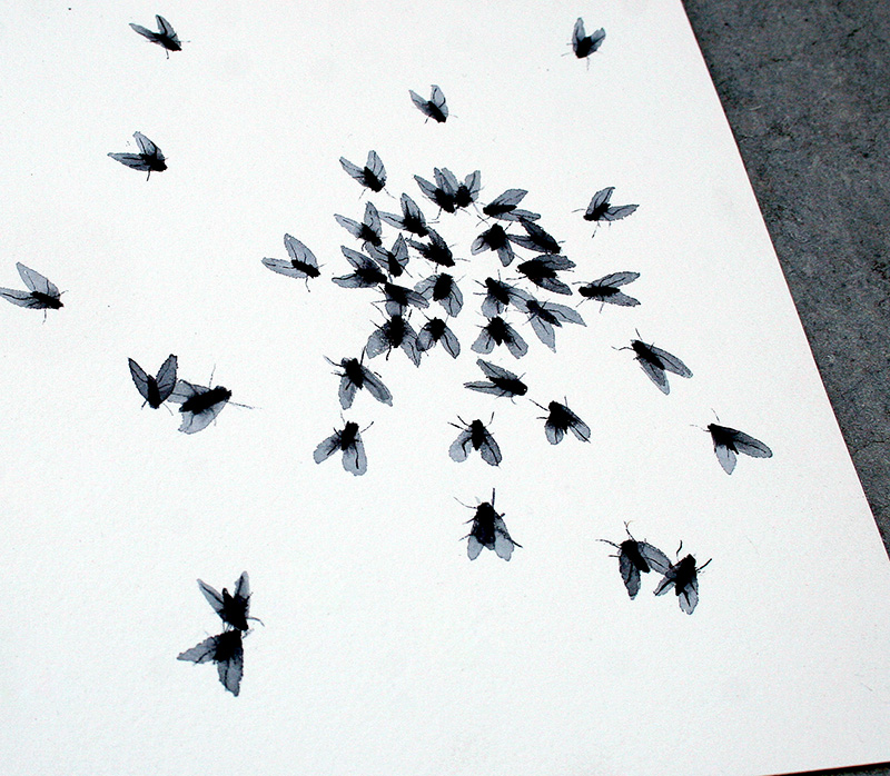 fly_fly_silvia_cairol016