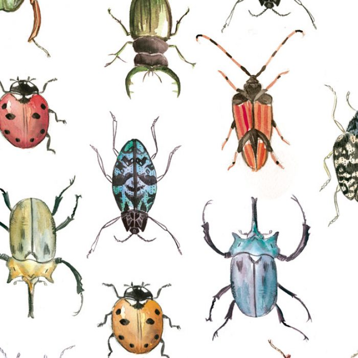 insects-silvia-cairol
